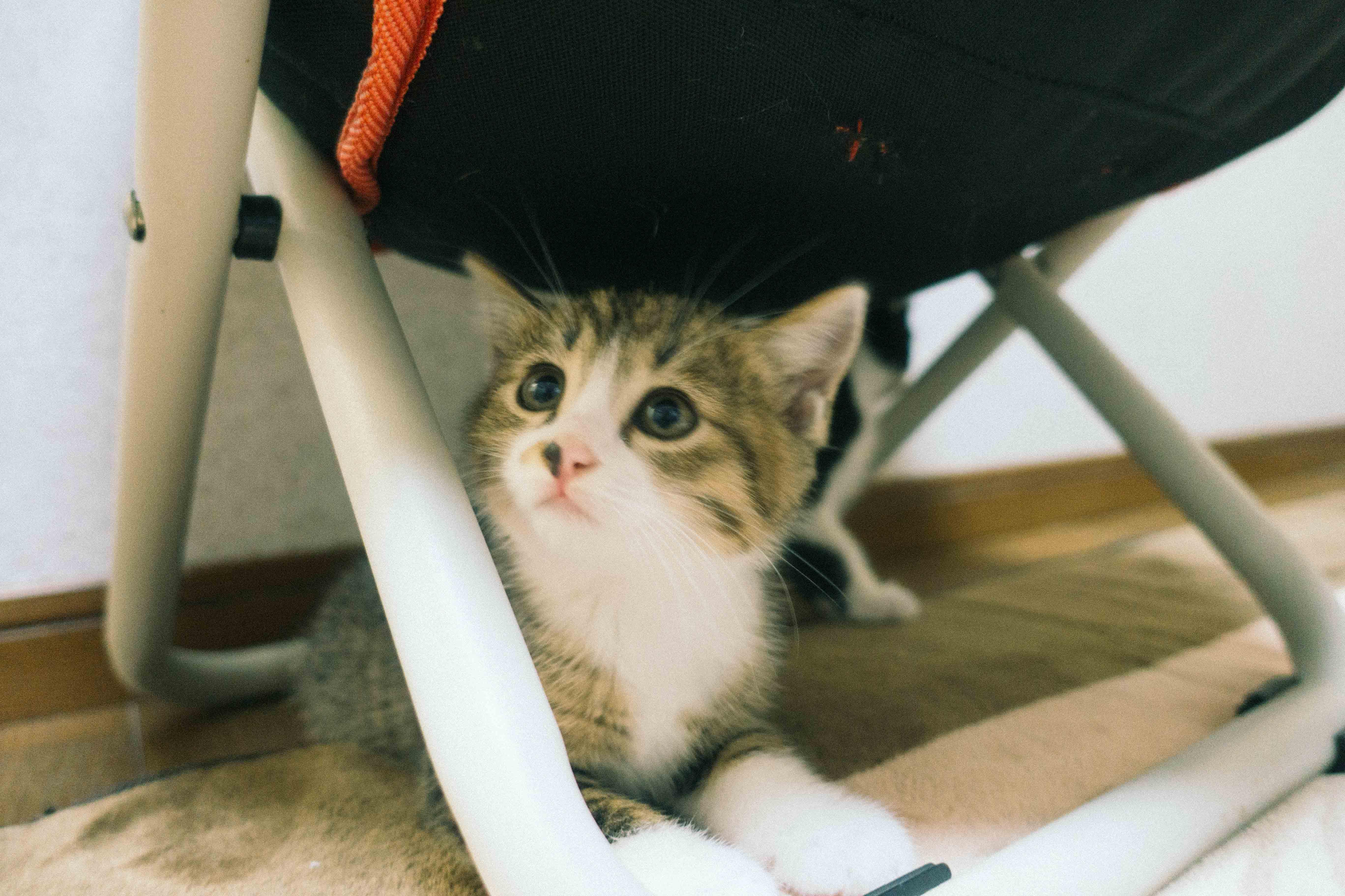 椅子の下の子猫