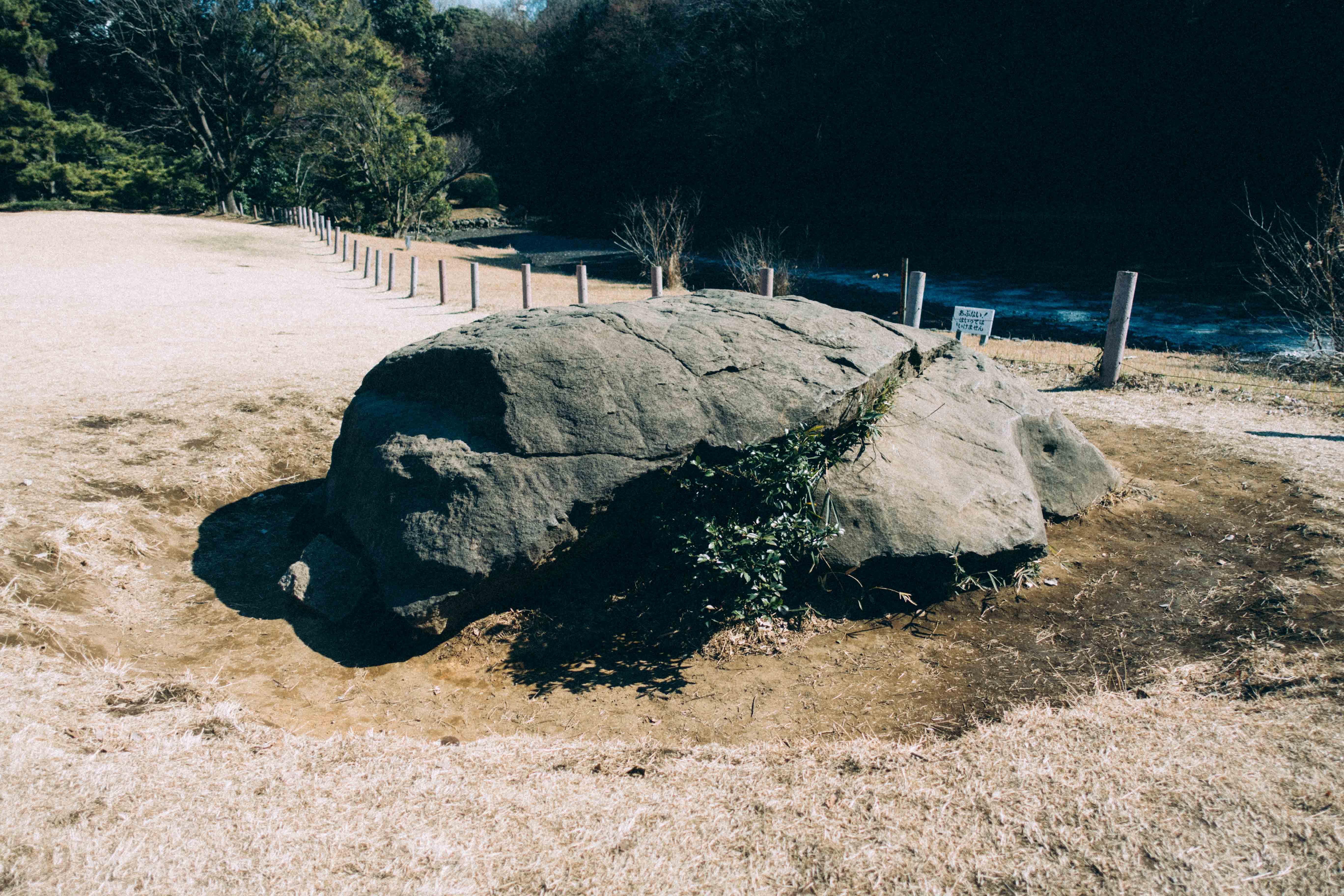 明治神宮の亀石