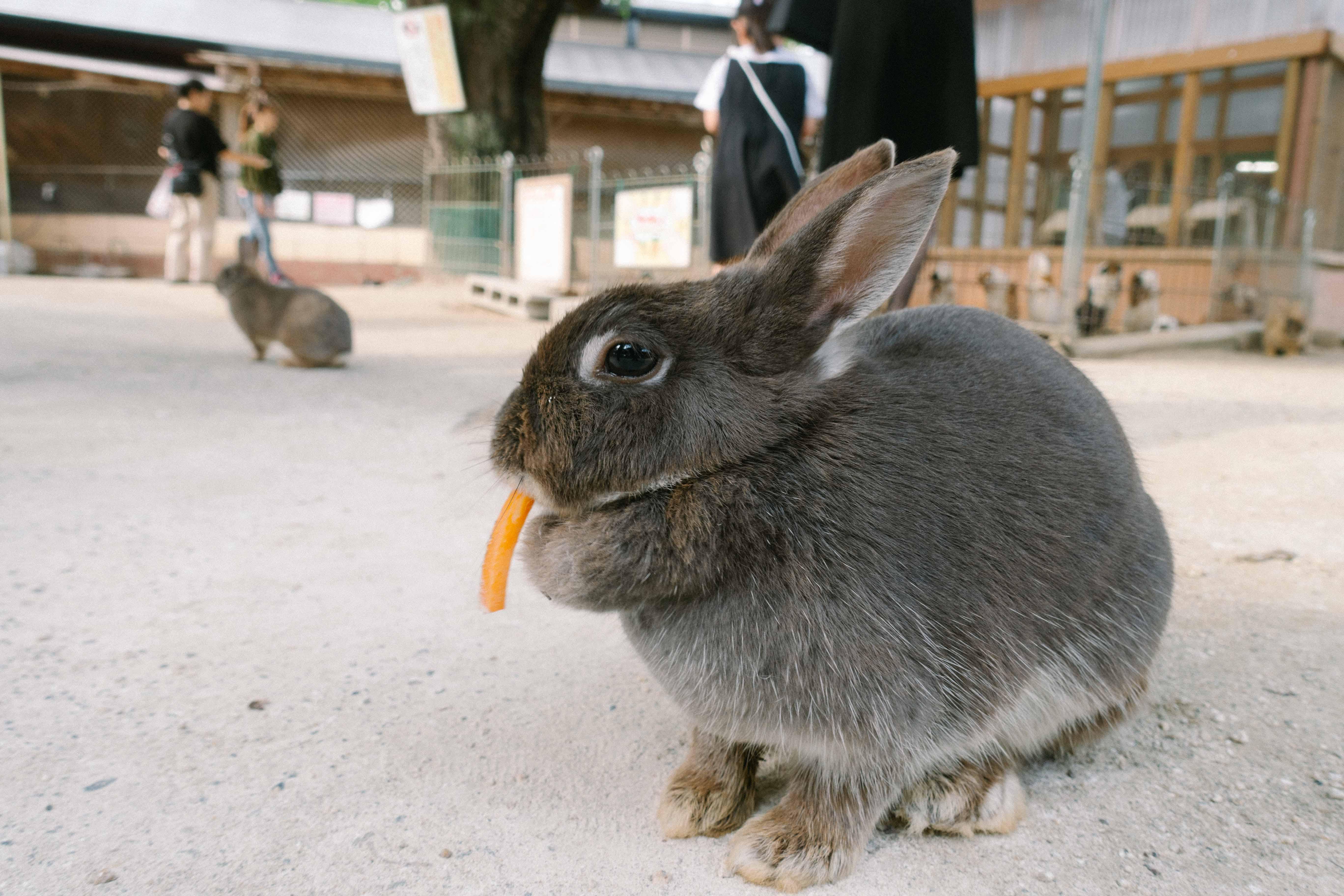 黒いウサギ