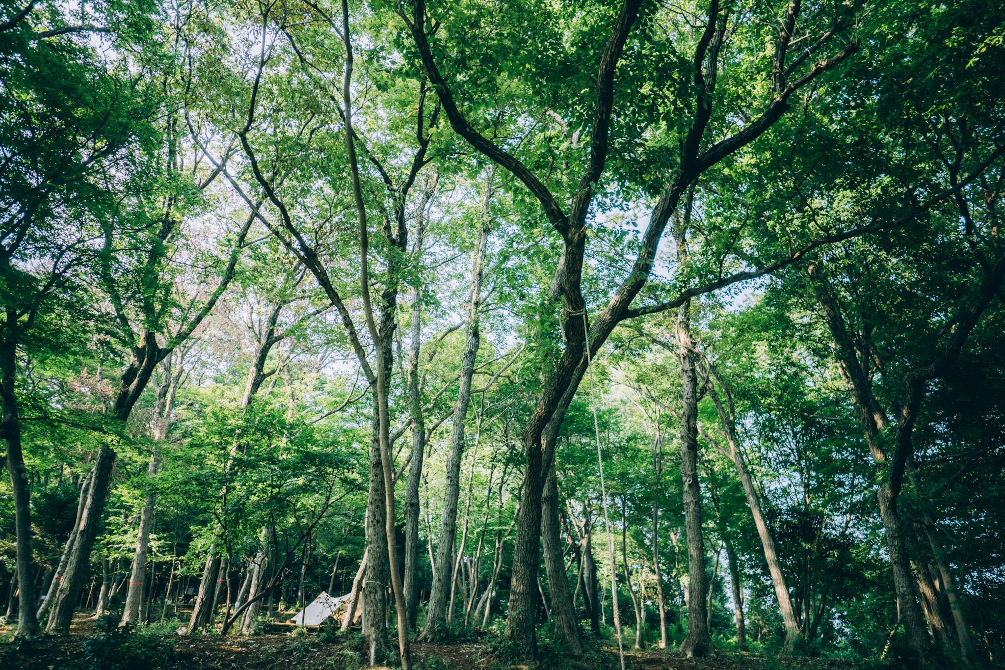 犬目の森キャンプ場